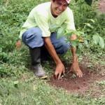 A felicidade de plantar uma árvore