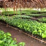 Viveiro de plantas novas, criadas sem adubos químicos
