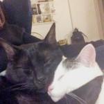 Os meus queridos gatos, o moshi e a miu miu.