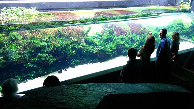 Florestas Submersas no Oceanário