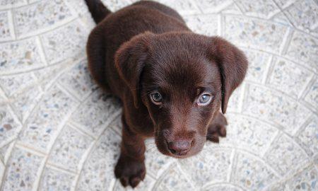 Afinal, o seu cão compreende mesmo o que lhe diz
