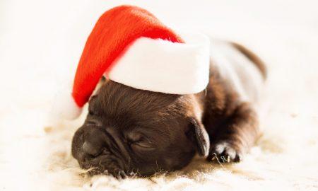 Natal de estimação