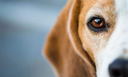 Já há uma linha Saúde 24 para animais