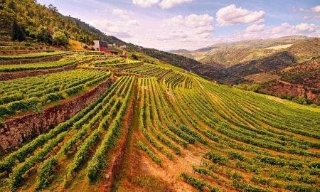 Se não pode ir até ao Douro, o Douro vem até si