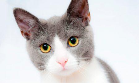 'O Gato Fica', nova empresa em Lisboa de catsitting