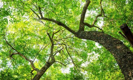 Ajude a floresta!
