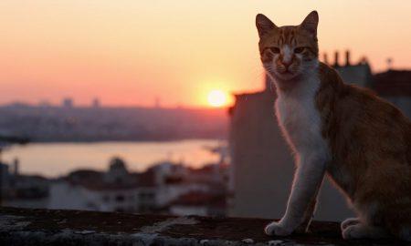 'Gatos', o documentário sobre gatos no Istambul