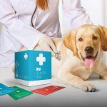 Seguro de saúde para o seu animal de estimação