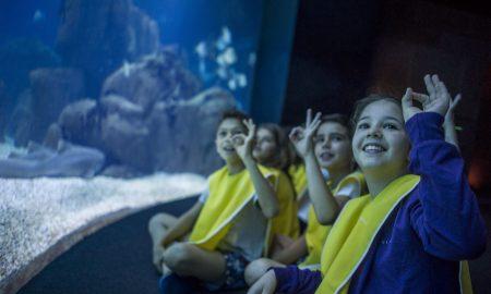 Ferias debaixo de agua_aquario central_ Oceanario de Lisboa_Pedro Pina (5)