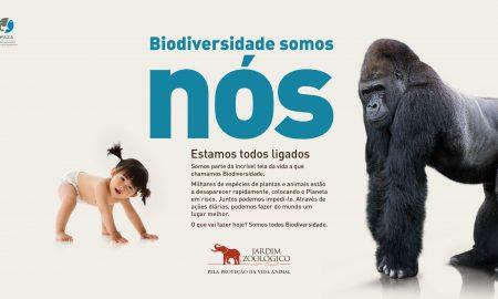 Jardim Zoológico_Nova Campanha_gorila