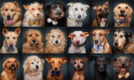 Imagens Exposição Dog