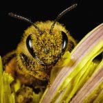 guerlain_7_BEE STORIES_ENDANGERED SPECIES