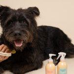 Freshly Pets (4)